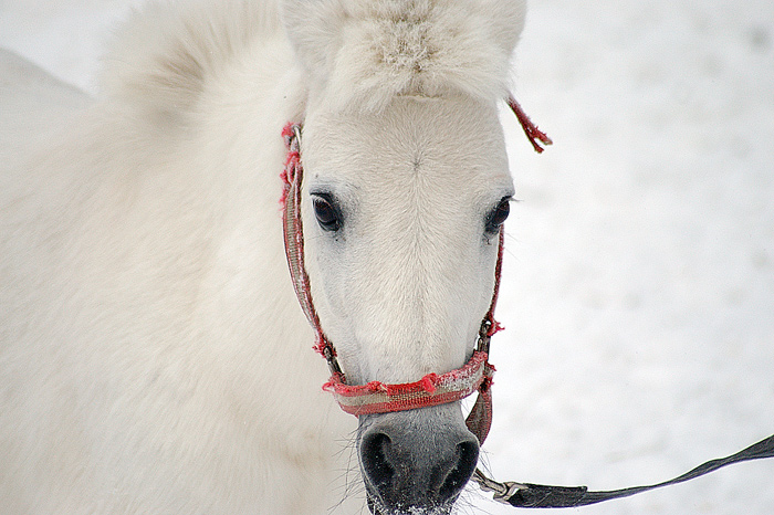 "photo ""ponny (:mini horse:)"" tags: nature, pets/farm animals"
