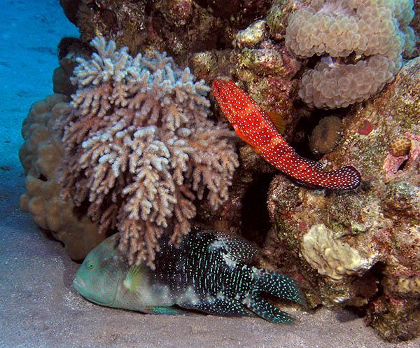 """photo """"Quarrel"""" tags: underwater,"""
