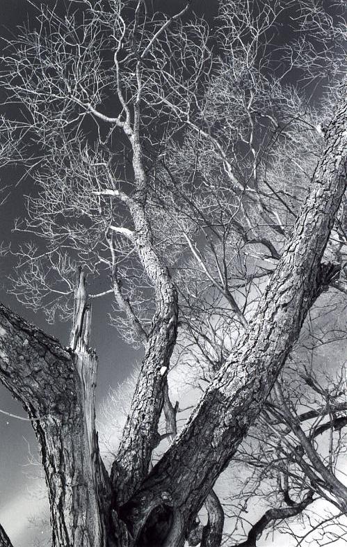 """фото """"контраст"""" метки: пейзаж,"""