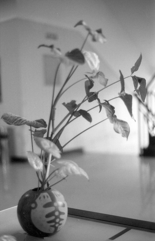 "photo ""quiescency"" tags: nature, black&white, flowers"