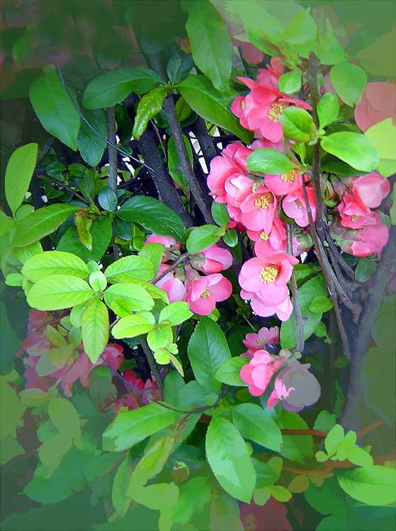 "photo ""Pinkomania"" tags: ,"