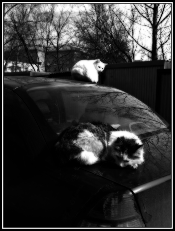 "photo ""Car+Cats (2)"" tags: genre, humor,"