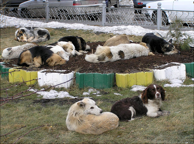 "photo ""Bed"" tags: nature, pets/farm animals"