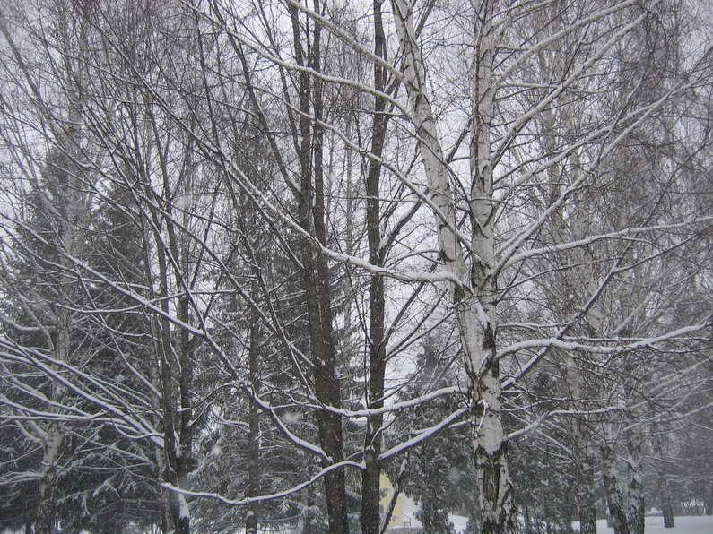 """фото """"Снегопад в пасмурную погоду"""" метки: пейзаж, зима"""