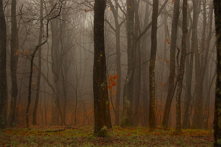 "photo ""***"" tags: landscape, nature, forest"