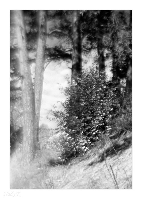 "photo ""Autumn.. And bush near a pines.."" tags: landscape, nature, autumn"