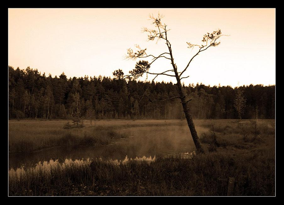 "photo ""***"" tags: landscape, nature, forest"