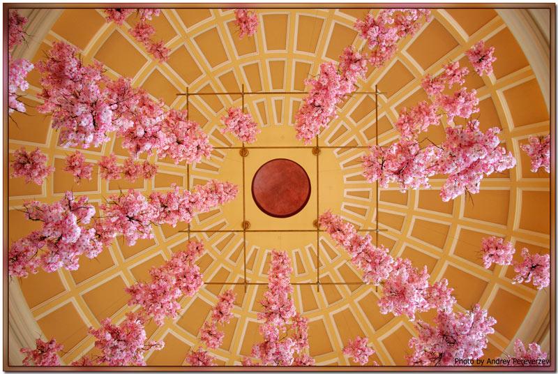 "photo ""A Little About Flowers"" tags: nature, architecture, landscape, flowers"