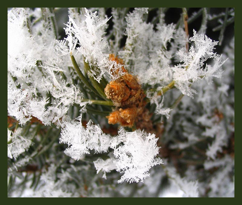 "photo ""snowflakes"" tags: macro and close-up, nature,"