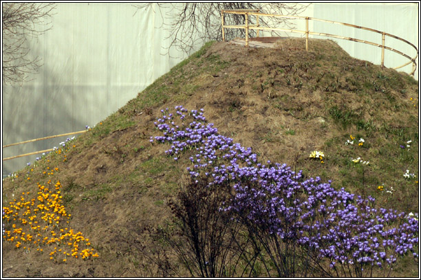 "photo ""Crocuses on Parnas"" tags: landscape, nature, flowers, spring"