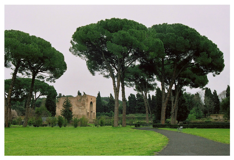"photo ""Pini presso le terme di Caracalla"" tags: landscape, travel, Europe"