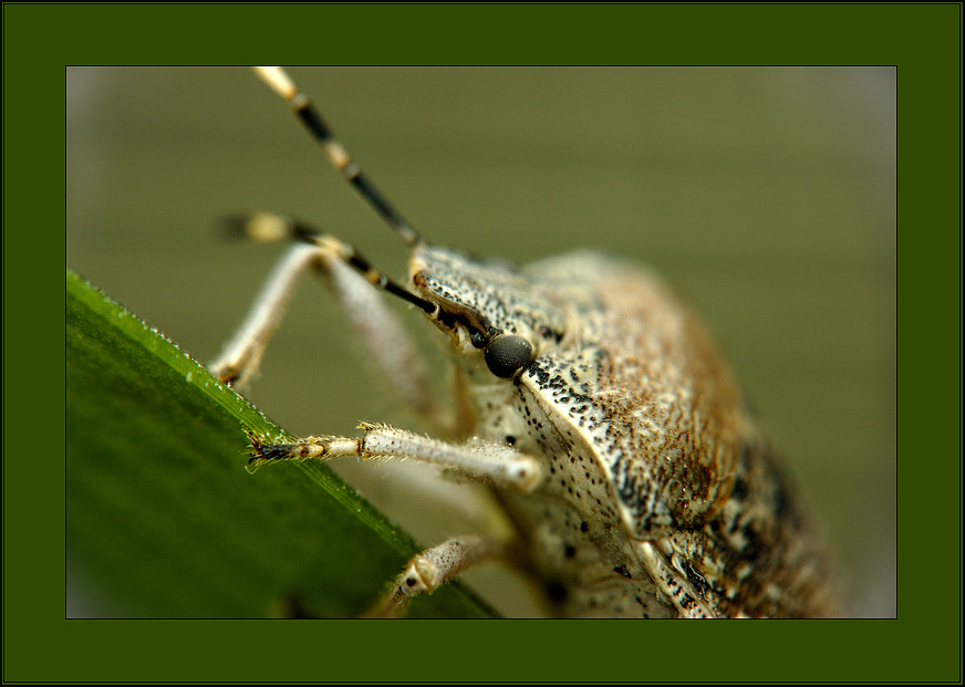 "photo ""Wood bug."" tags: macro and close-up, nature, insect"