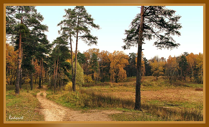 "фото ""Золото Осени..."" метки: пейзаж, осень"