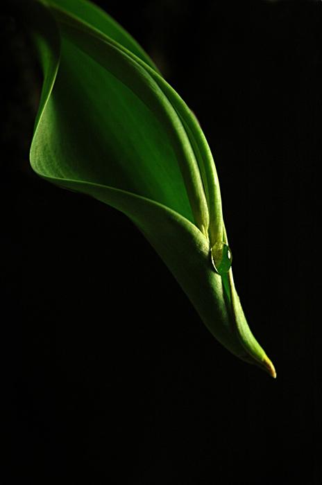 """photo """"green life 2"""" tags: macro and close-up,"""