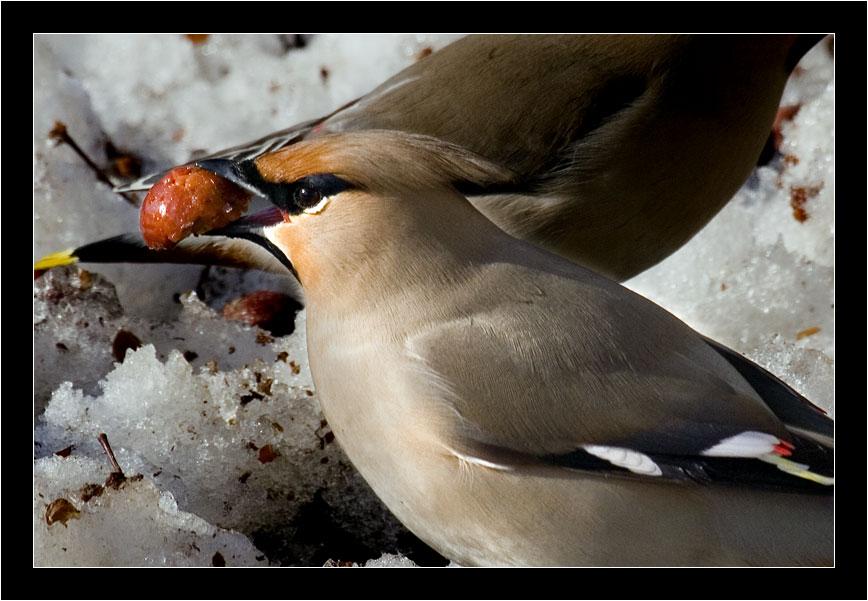 """photo """"breakfast"""" tags: nature, wild animals"""