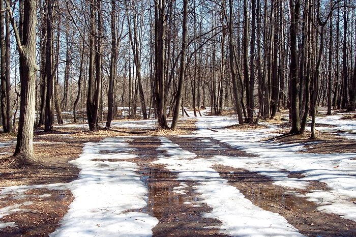 "photo ""The last year's snow thew"" tags: landscape, forest, spring"