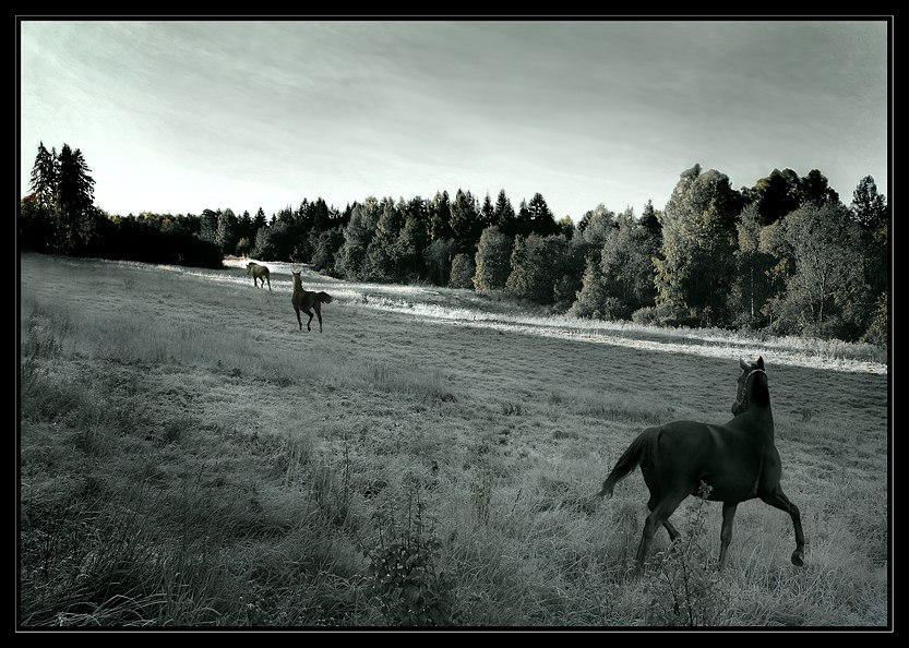 "photo ""Let my horses go! (Go down Moses)"" tags: nature, genre, pets/farm animals"