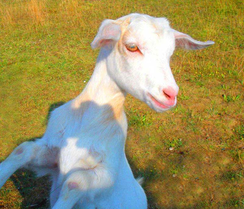 "photo ""The ""Biyshka"""" tags: nature, pets/farm animals"