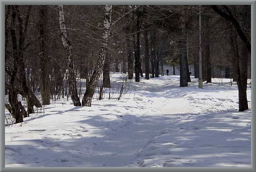 "photo ""March"" tags: landscape, forest, winter"