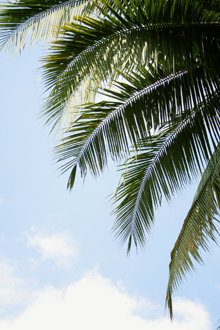 "photo ""the palm tree.the sun.the sky."" tags: travel, landscape, summer"