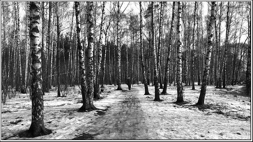 """photo """"Among birches"""" tags: landscape, forest, spring"""