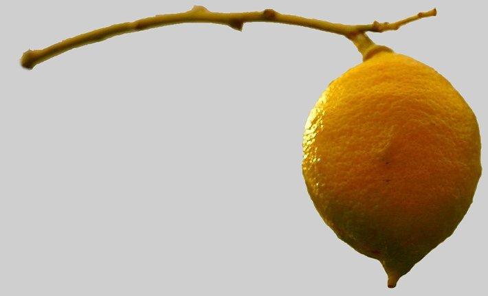 "photo ""The Lemon"" tags: nature, flowers"