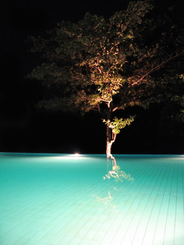 "photo ""Pool tree"" tags: travel, landscape, Asia, night"