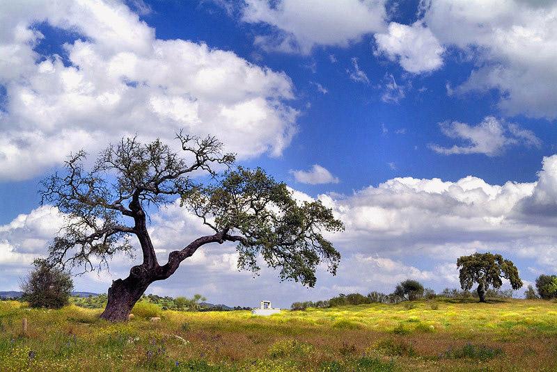 "photo ""Spring"" tags: landscape, spring"
