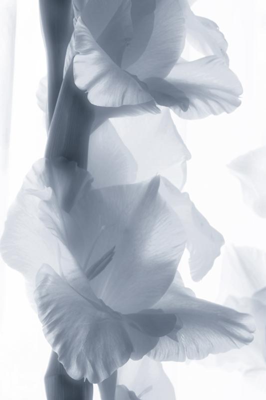 "photo ""***"" tags: nature, black&white, flowers"