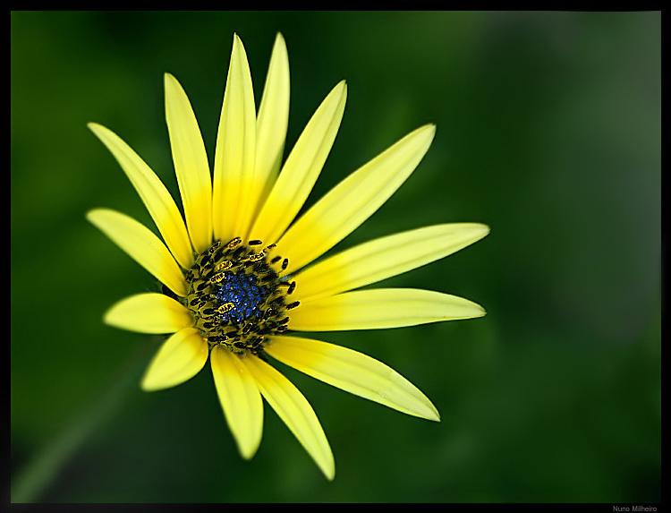 "photo ""Green Yellow and Blue"" tags: macro and close-up,"