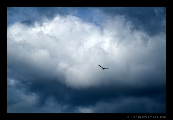 "photo ""***"" tags: landscape, nature, clouds, wild animals"