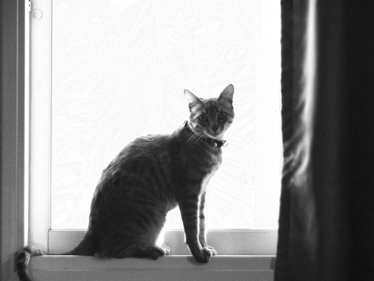 "photo ""Don't you move"" tags: nature, black&white, pets/farm animals"