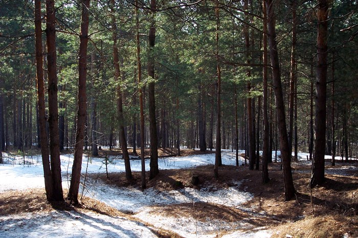 "photo ""April"" tags: landscape, forest, spring"