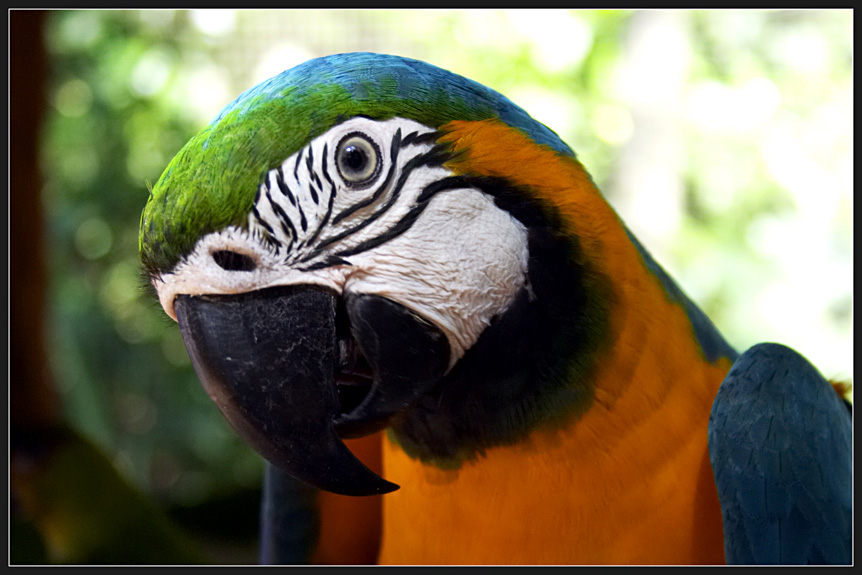 "photo ""Parrot"" tags: travel, nature, South America, wild animals"