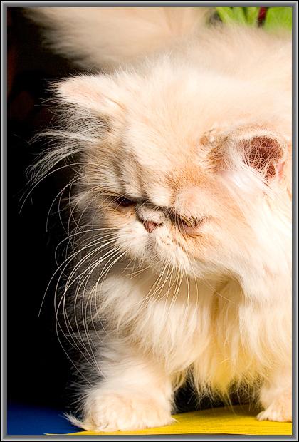 """photo """"Moustache"""" tags: nature, pets/farm animals"""