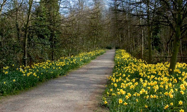 "photo ""Walk The Daffodil Path"" tags: nature, flowers"