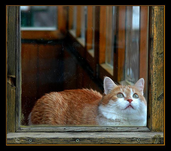 "photo ""*"" tags: genre, nature, pets/farm animals"