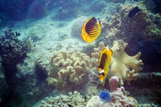 "photo ""Underwater"" tags: underwater,"