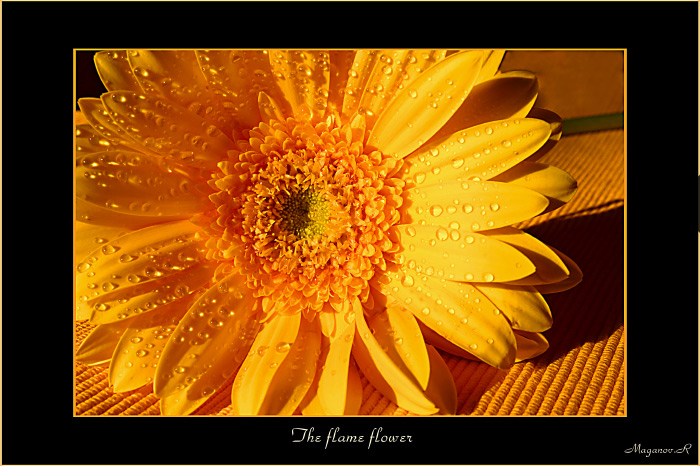 "photo ""The flame flower"" tags: nature, macro and close-up, flowers"