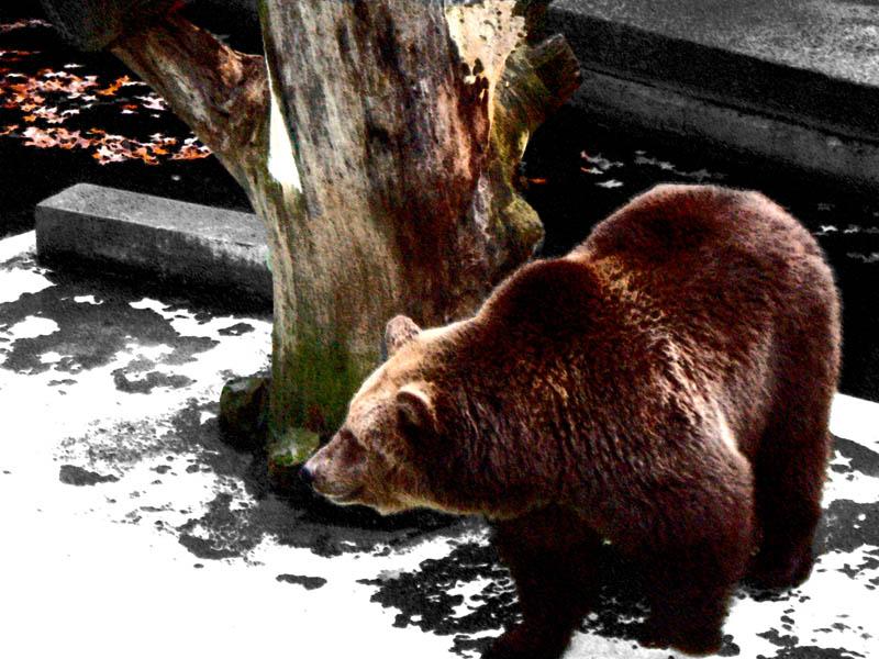 "фото ""Medo"" метки: природа, дикие животные"