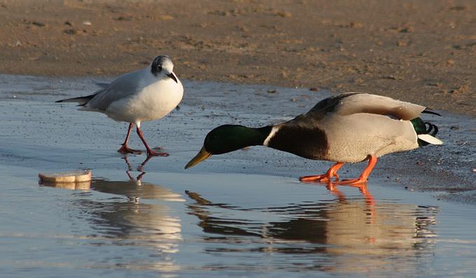 "photo ""Battle"" tags: nature, wild animals"