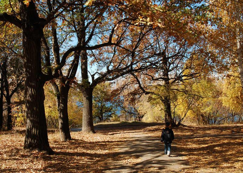 """фото """"Тропинка к Волге"""" метки: пейзаж, лес, осень"""