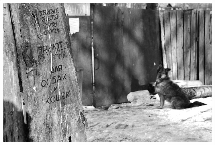 "photo ""All-Union society of animal protection. A shelter ""Ilyinka"" for dogs and cats."" tags: ,"