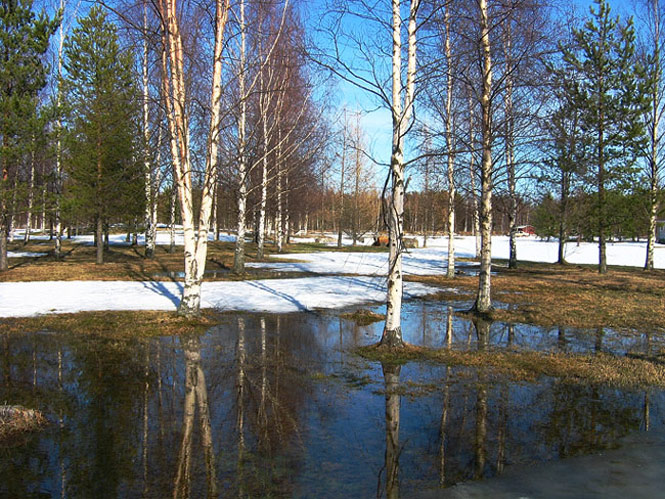 "photo ""Spring in Finland"" tags: landscape, forest, spring"