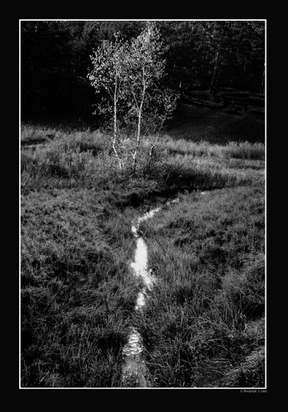 """фото """"Истоки"""" метки: пейзаж,"""