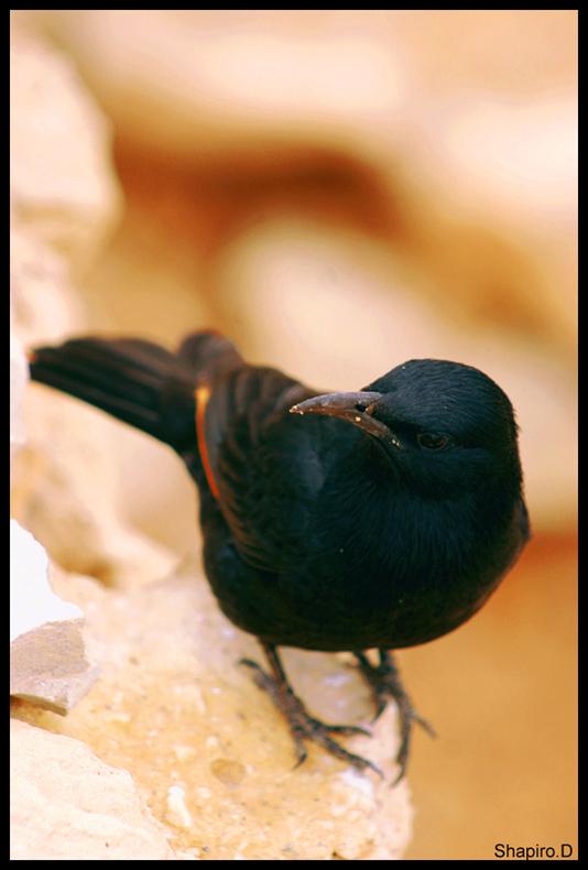 "фото ""CloseUp"" метки: природа, дикие животные"
