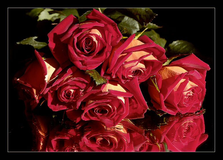 "photo ""Roses"" tags: still life,"