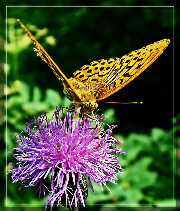 "photo ""V - shaped."" tags: macro and close-up, nature, insect"