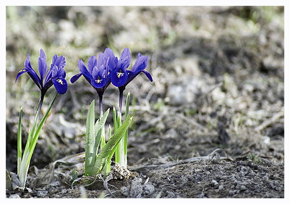 "photo ""the first"" tags: landscape, nature, flowers, spring"
