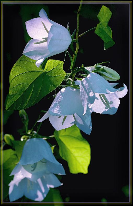 "photo ""Celebratory sound"" tags: nature, flowers"